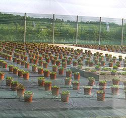 NIABIF GrowingMoreWithLess 250x250